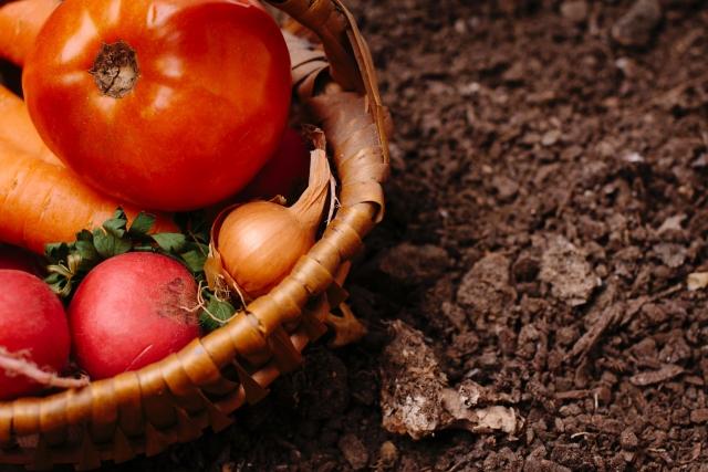 家庭菜園の失敗例